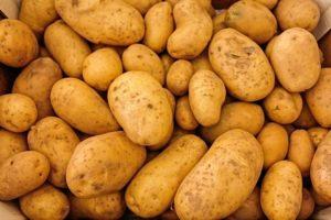 Ziemniaki zaczynały jako roślina doniczkowa