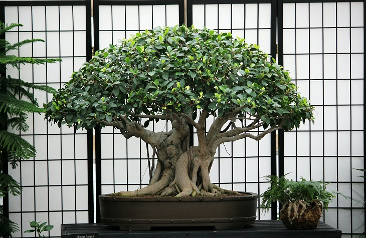 Dzewko bonsai. Cierpliwość i sztuka ograniczania w pełnej krasie.