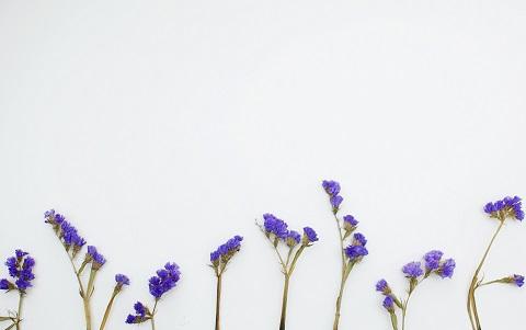 kwity minimalizmu wzrastają powoli