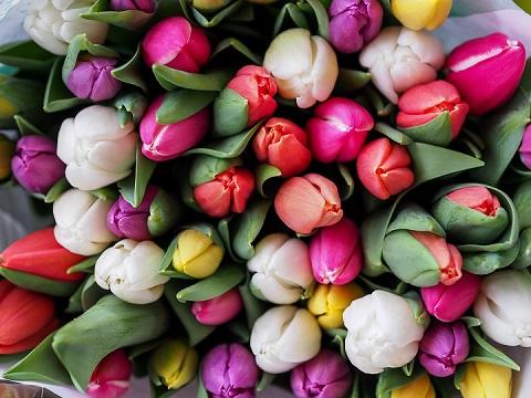 A wiosną obraz  boga widać w tulipanach...